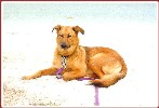 """Today, they took me to a great place - the city beach 